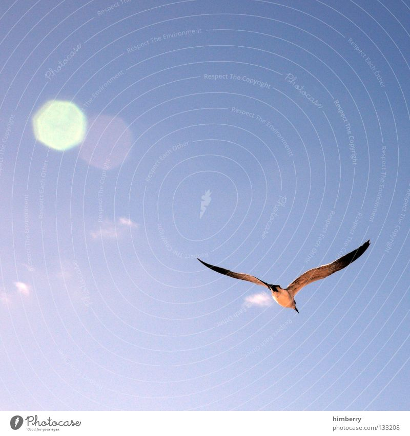 seagull pic Bird Sailing Glide Summer Flying Aviation fly Sun reflection glider Wing Feather Sky Blue Freedom sunny