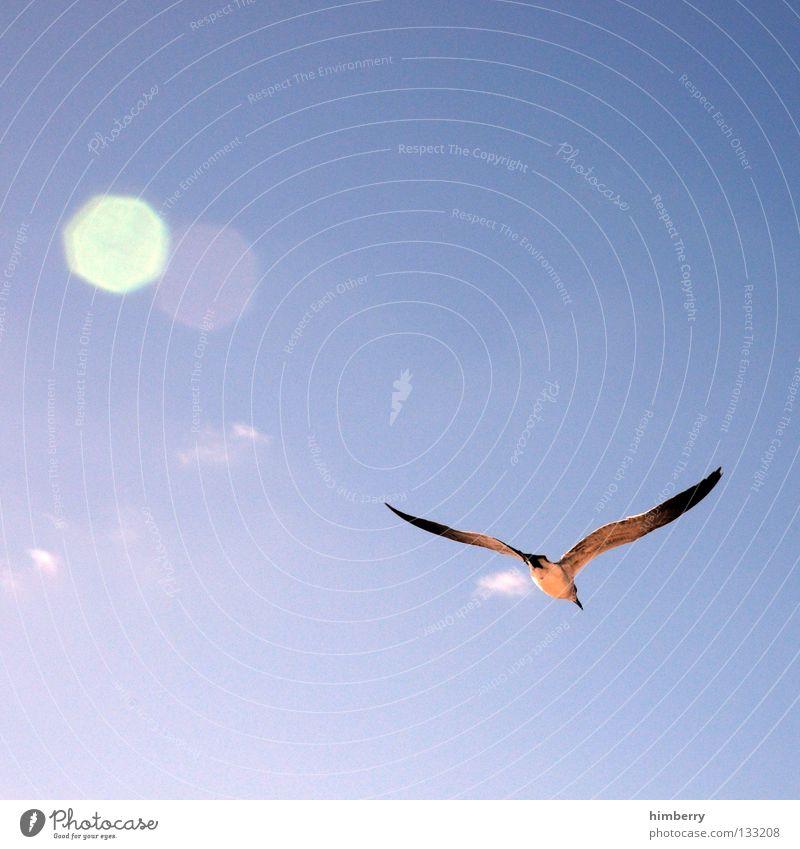 Sky Sun Blue Summer Freedom Bird Flying Aviation Feather Wing Sailing Glide