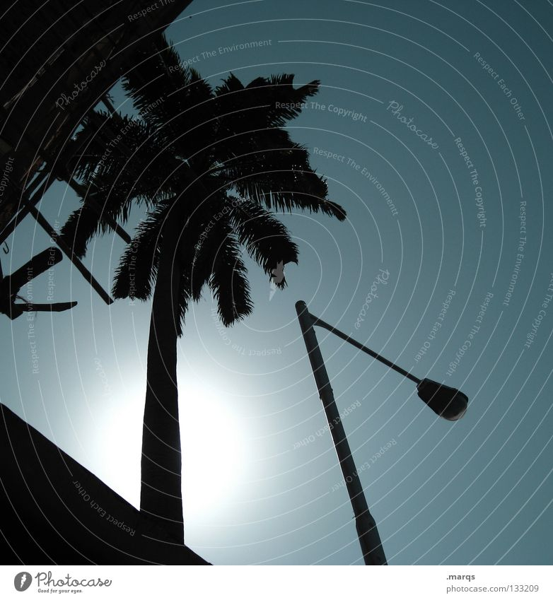 Sun Blue Plant Summer Vacation & Travel Leaf Black Building Warmth Lighting Crazy Might Physics Hot Lantern India