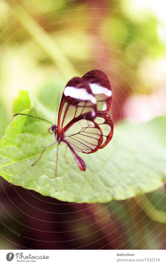 dreamy Nature Plant Animal Spring Summer Tree Bushes Leaf Garden Park Meadow Wild animal Butterfly Wing glass wing butterfly 1 Observe Relaxation Exceptional