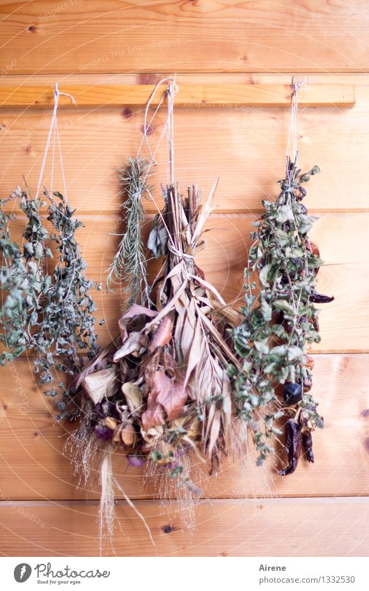 dehumidified Herbs and spices Organic produce Vegetarian diet House (Residential Structure) Hut Wall (barrier) Wall (building) Wooden wall Bouquet Hang Faded