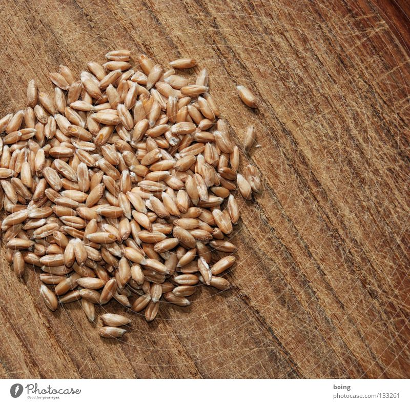 heaps Spelt Mill Mince Flour Rye Wheat Barley Unripe spelt grains Bread Cereal Wholewheat Ecological Sandal Baker Bakery Grain Supply Thresh Baked goods