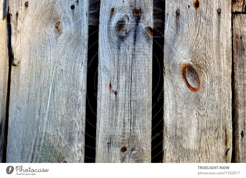 Old boards Nature Deserted Ruin Manmade structures Wall (barrier) Wall (building) Door Wooden fence Monument Brown Gray Black Senior citizen Poverty Esthetic