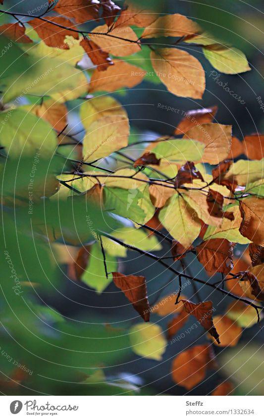 transmutation Nature Plant Autumn Leaf Autumn leaves Beech leaf Automn wood Multicoloured Sense of Autumn Transience Change Autumnal Autumnal colours October