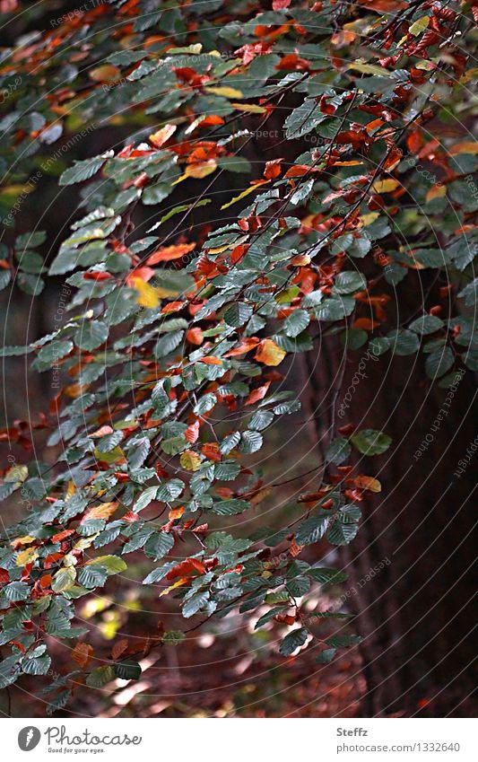 beginning of autumn Nature Plant Autumn Leaf Autumn leaves Beech tree Beech leaf Forest Automn wood Beech wood Beautiful Yellow Green Orange Sense of Autumn