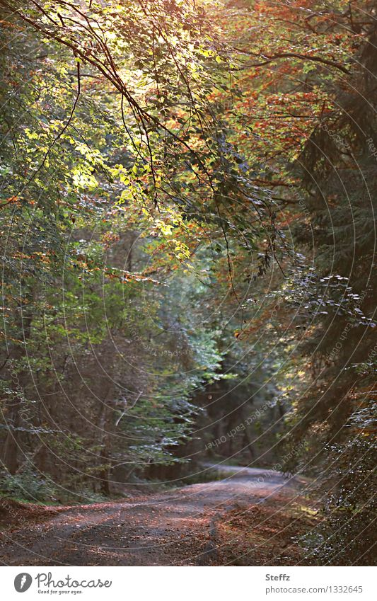 Forest bathing in September forest bath Automn wood change of seasons Light through leaves Nature's cycle Deciduous forest deciduous trees Seasons transient