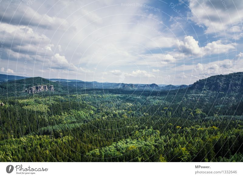Nature Tree Landscape Clouds Forest Mountain Environment Rock Beautiful weather Elements Infinity Climbing Virgin forest Nature reserve Saxon Switzerland