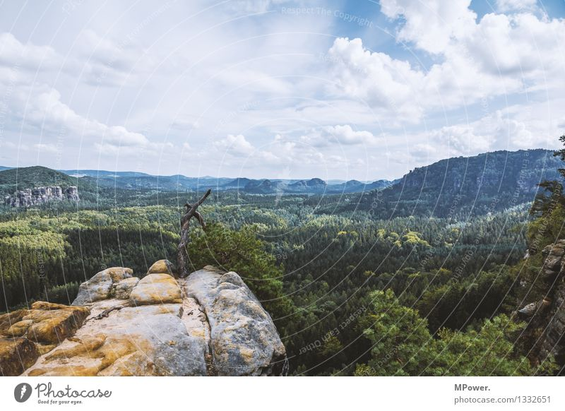notall (s)schlechtimosten! Environment Nature Landscape Elements Clouds Beautiful weather Tree Infinity Saxon Switzerland Virgin forest Nature reserve