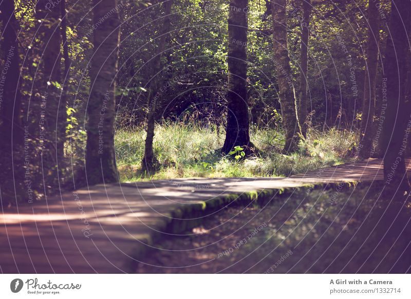 Rays of hope on the wooden path of life Environment Nature Landscape Sun Sunlight Autumn Weather Beautiful weather Tree Forest Bog Marsh Illuminate Natural