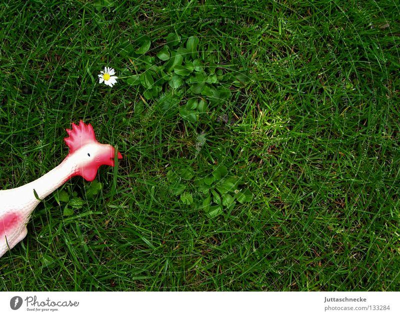 White Green Red Flower Meadow Death Grass Garden Bird Lie Transience Lawn Toys Humor Statue Daisy