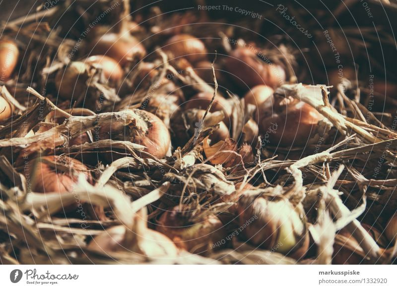 fresh organic onion harvest Food Vegetable Onion Onion skin Onion ring Urban gardening Root Nutrition Eating Lunch Dinner Picnic Organic produce Vegetarian diet