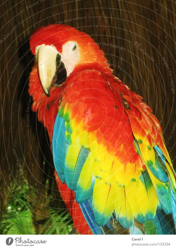 Blue Vacation & Travel Green Beautiful Red Colour Animal Yellow Bird Park Earth Flying Sit Feather Wing Gloomy
