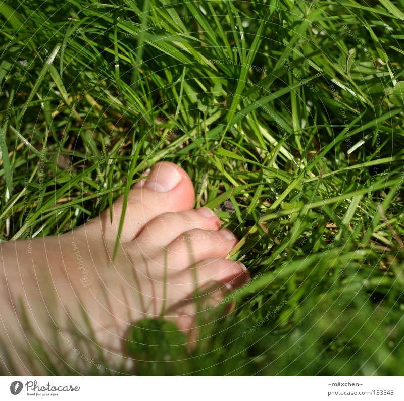 Human being Nature Green Summer Joy Relaxation Meadow Freedom Grass Feet Healthy Contentment Footwear Going Skin Walking