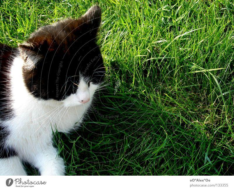 dreamy Relaxation Animal Grass Meadow Cat Dream Green Boredom Peace Dreamily Oversleep Colour photo