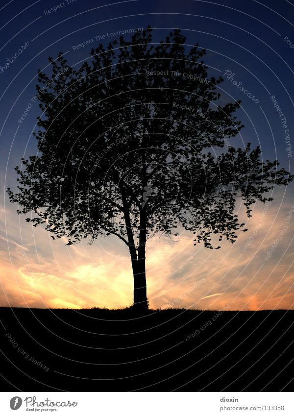 Tree Sun Blue Calm Leaf Black Relaxation Contentment Moody Orange Earth Branch Middle Tree trunk Dusk Root
