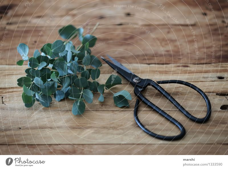 Nature Plant Green Emotions Garden Moody Work and employment Leisure and hobbies Living or residing Decoration Bushes Fragrance Wooden table Gardening Scissors