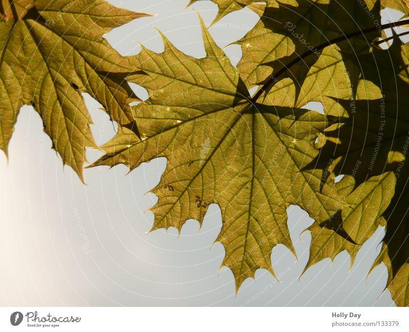Sky Tree Summer Leaf Dark Bright Level Anger Transparent Caterpillar Translucent