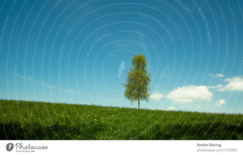 birch Birch tree Tree Meadow Hill Sky Clouds Horizon Far-off places Freedom Loneliness Room