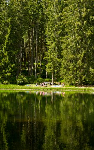 picnic Nature Beautiful weather Tree Forest Lakeside Pond Green Reflection Water reflection Body of water Fir tree Picnic Leisure and hobbies Trip