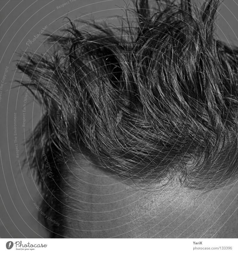 Risen Forehead Hair and hairstyles Cut Haircut Man Gray Thin Muddled Hedgehog Morning Arise Wake up Style Hairline Shampoo Black & white photo Head hairy head