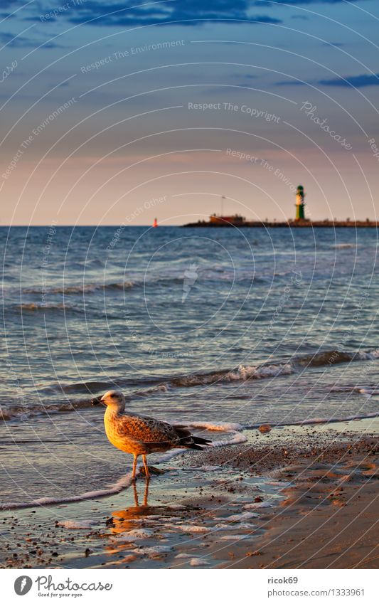 Baltic coast Vacation & Travel Beach Nature Landscape Water Clouds Coast Baltic Sea Ocean Lighthouse Animal Wild animal Bird 1 Romance Idyll Tourism Seagull