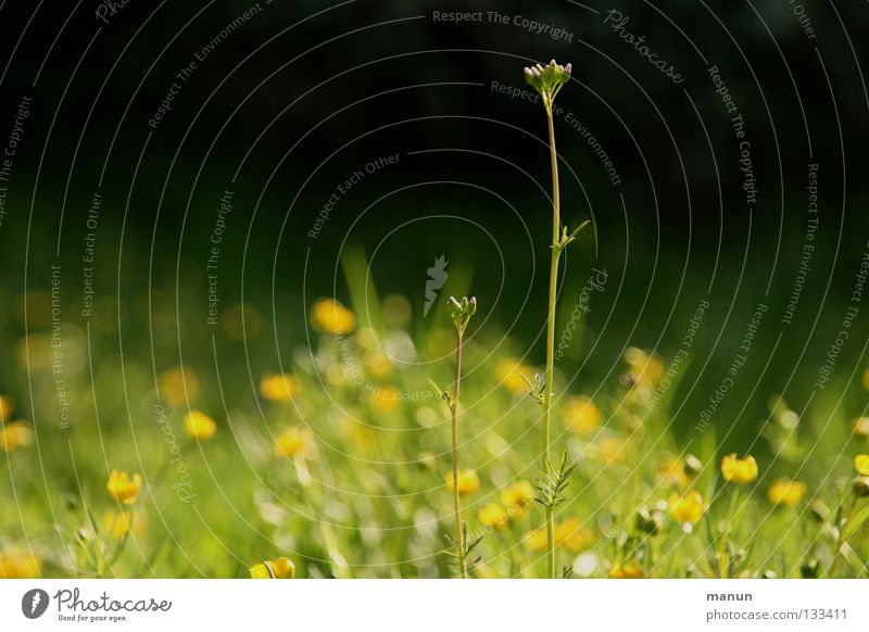 Nature Green Summer Flower Calm Relaxation Environment Yellow Meadow Warmth Grass Spring Blossom Tall Fresh Growth