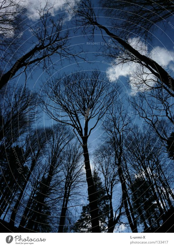 Sky Tree Clouds Forest