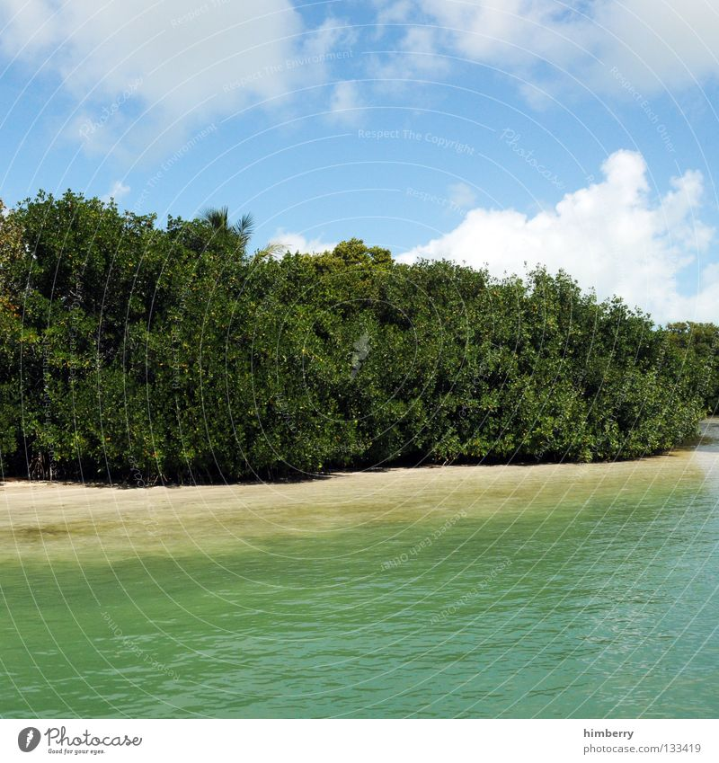 Nature Water Sky Tree Ocean Plant Beach Clouds Animal Park Sand Earth Coast Bushes Botany National Park