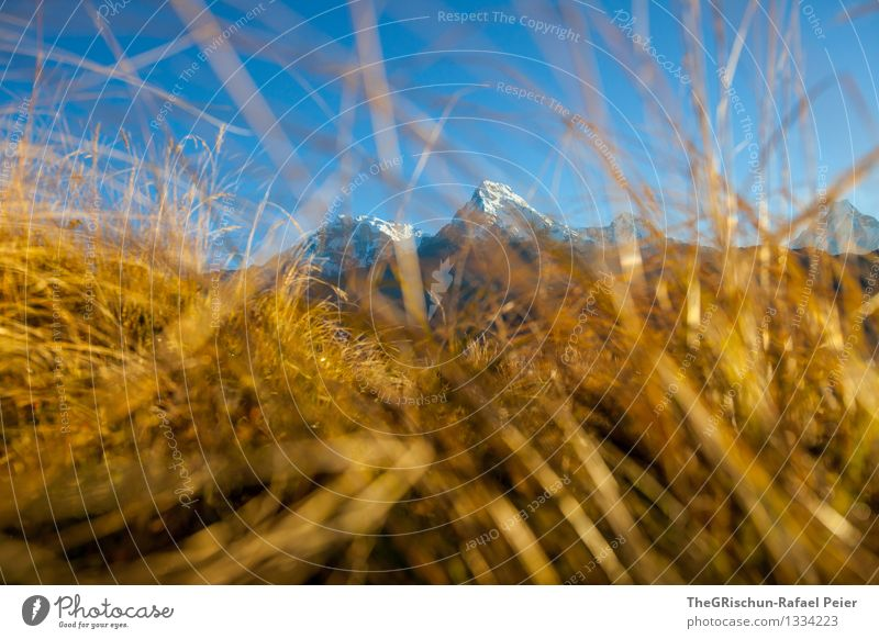 Golden Grass Environment Nature Landscape Blue Brown Yellow Black White Cute Mountain Peak Meadow Glittering Lighting Blade of grass Nepal Vantage point