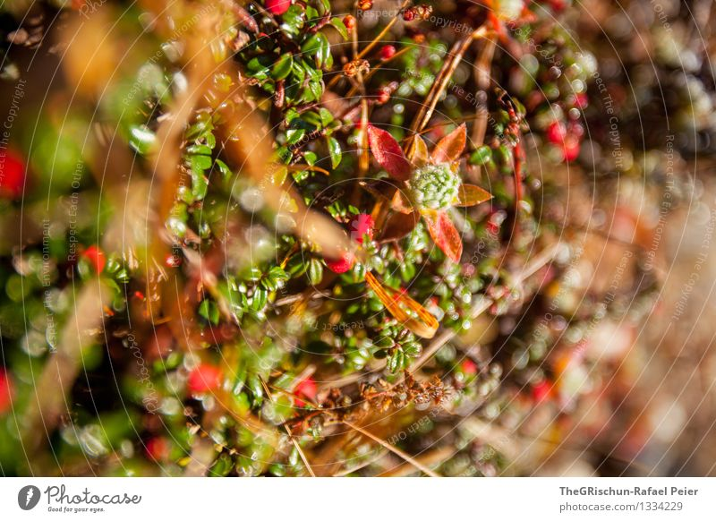 Nature Plant Green Red Black Yellow Grass Pink Herbs and spices Blade of grass Dew Foliage plant