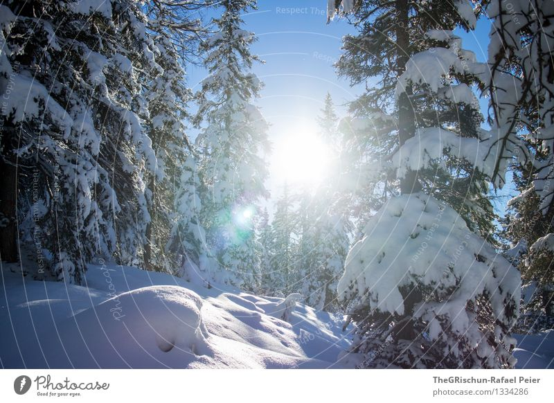 Sky Nature Blue White Sun Tree Landscape Winter Forest Black Environment Snow Gray Brown Cooking & Baking Beam of light