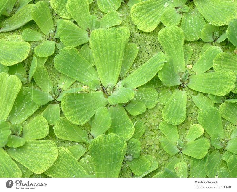 leafs Leaf Green