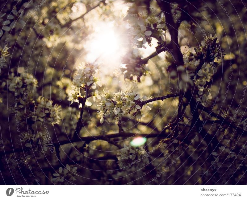 Tree Sun Summer Yellow Dark Meadow Blossom Spring Bright Glittering Hope Bushes Violet Branch Blossoming Progress
