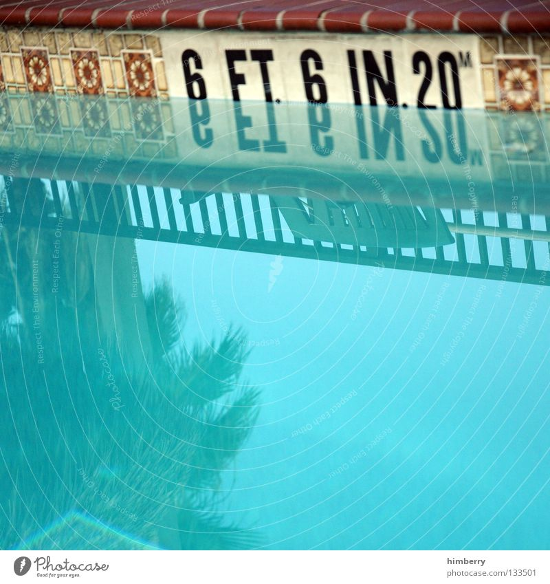 6 feet deep Swimming pool Retro Reflection Palm tree Vacation & Travel Florida Turquoise Americas Detail Playing Tile Old flagging swim dive no diving mirroring