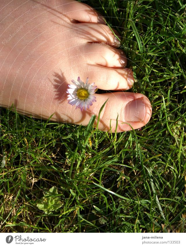 Barefoot. Grass Green Grass green Summer Spring April May Summery Daisy Sunlight Blade of grass Toes Toenail Morning Soft Physics Healthy Joy Feet barefeet