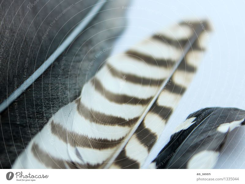 Nature White Calm Black Warmth Flying Bird Brown Elegant Feather Esthetic Wing Uniqueness Soft Touch Wellness