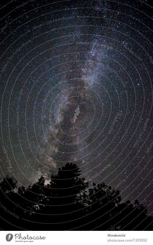 300 - High above Sky Cloudless sky Night sky Stars Autumn Beautiful weather Tree Stand Illuminate Esthetic Exceptional Dark Gigantic Infinity Enthusiasm