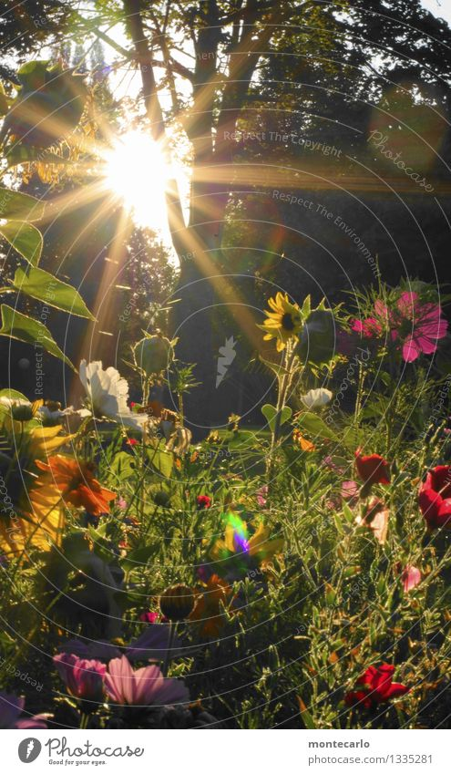 Come home and the sun's coming up. Environment Nature Plant Sun Sunrise Sunset Sunlight Summer Beautiful weather Tree Flower Grass Bushes Leaf Blossom