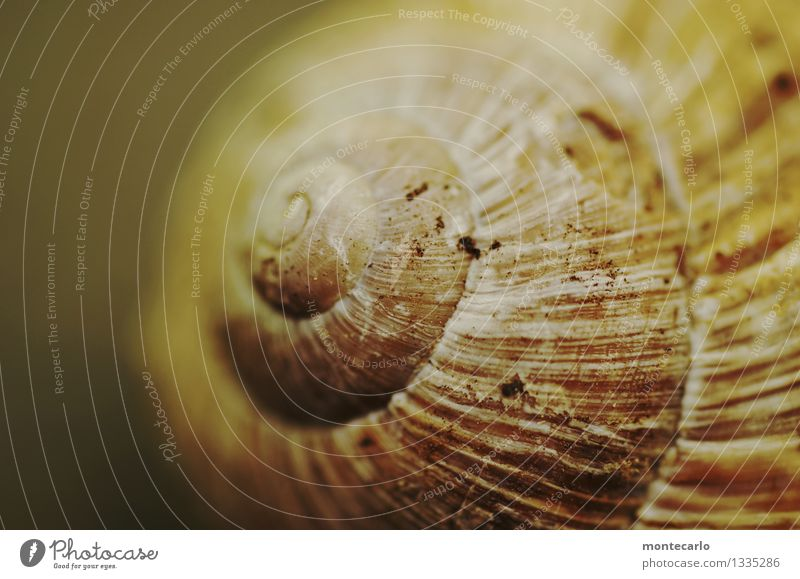 schneggenhaus Environment Nature Wild animal Snail 1 Animal Snail shell Dirty Thin Authentic Beautiful Uniqueness Cold Small Near Natural Round Dry Brown Gray