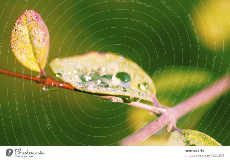 morning dew Environment Nature Plant Water Drops of water Summer Autumn Climate Beautiful weather Bushes Leaf Foliage plant Wild plant Thin Authentic Simple