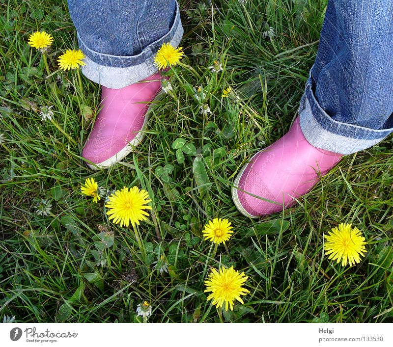 Women's feet in pink rubber shoes on a meadow with dandelion flowers Multicoloured Spring April May Meadow Flower meadow Grass Blade of grass Blossom Blossoming