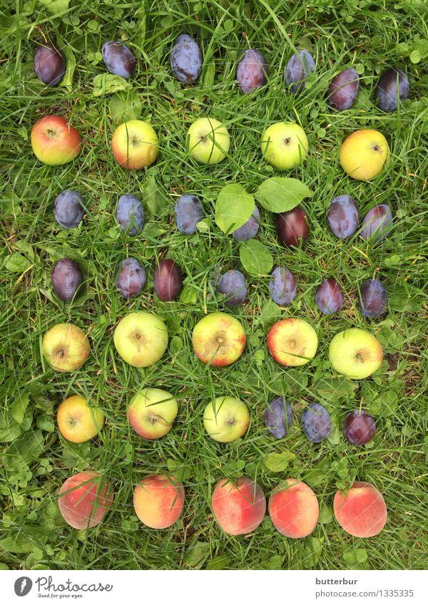 Plum, plum, plum, apple, plum..... Food Fruit Apple Peach Nutrition Picnic Leisure and hobbies Playing Garden Environment Nature Landscape Plant Animal Summer