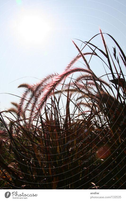 Sun Flower Blue Summer Relaxation Grass Art Violet Radiation Still Life Sculpture