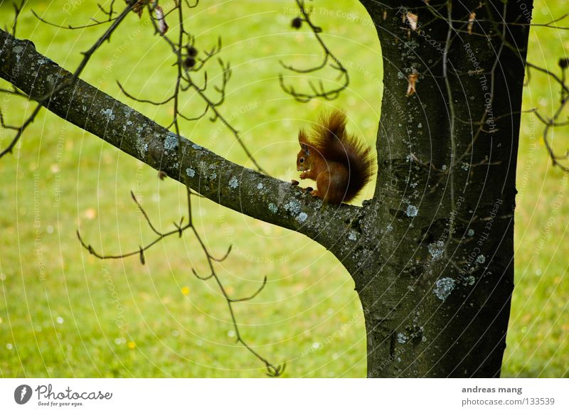 Nature Tree Nutrition Animal Meadow Grass Spring Food Branch To enjoy Watchfulness Mammal Nut Squirrel Nut Junction