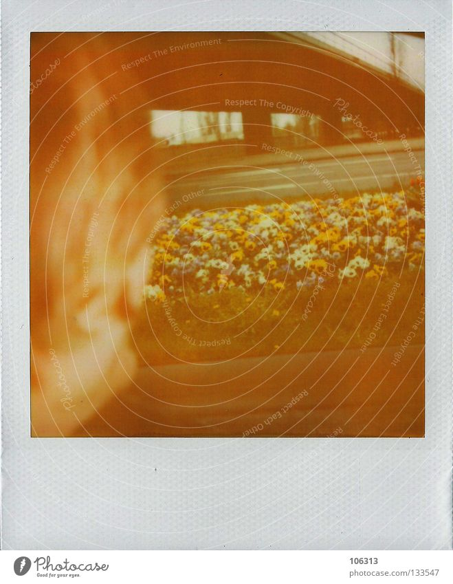 moscow in berlin (for max) Vantage point Yellowness Past Driving Crash barrier Pansy Flower Plant Socialism Nature Polaroid Analog Forget Expectation Red