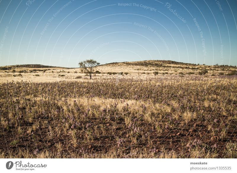 outback Tree Blue Yellow Australia Desert Outback Steppe Sparse Bleak Floor covering Hill Ground Earth sandy soil Vacation & Travel Colour photo Subdued colour