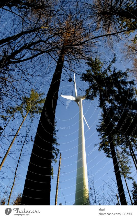 natural power Wind energy plant Electricity Sky Coniferous trees Forest Sky blue Geometry Deciduous tree Perspective Coniferous forest Glade Paradise Clearing
