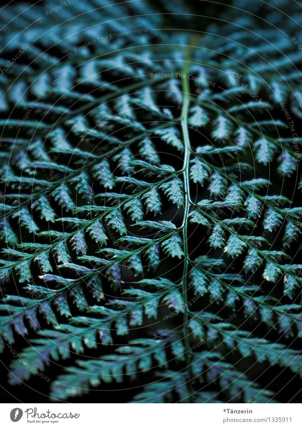 structural perspective Environment Nature Plant Autumn Tree Fern Leaf Foliage plant Forest Beautiful Green Colour photo Subdued colour Exterior shot