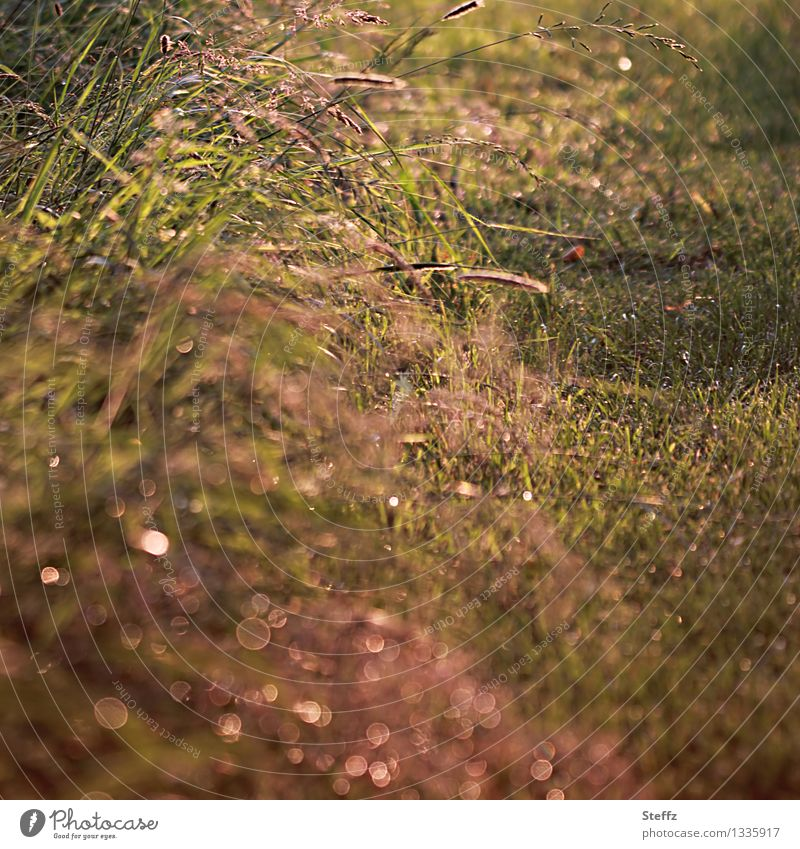 Grasses at the wayside in the afternoon light grasses Domestic Warm light attentiveness Attentive naturally Mood lighting Mindfulness in nature June