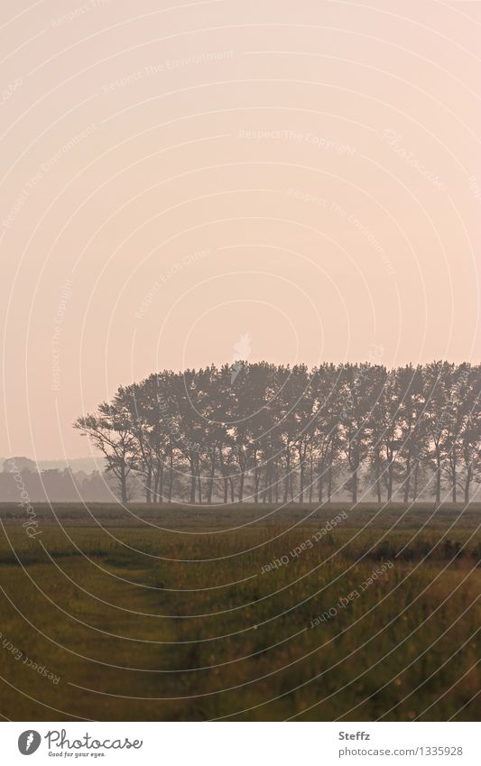atmospheric landscape Nature Landscape Plant Sky Tree Grass Field Moody Romance Calm Mood lighting Lanes & trails Afternoon Fog Ambience Dreamily Loneliness